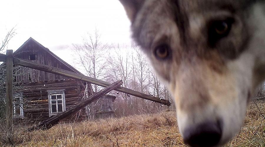 Что удалось обнаружить исследователям в лесу Чернобыля