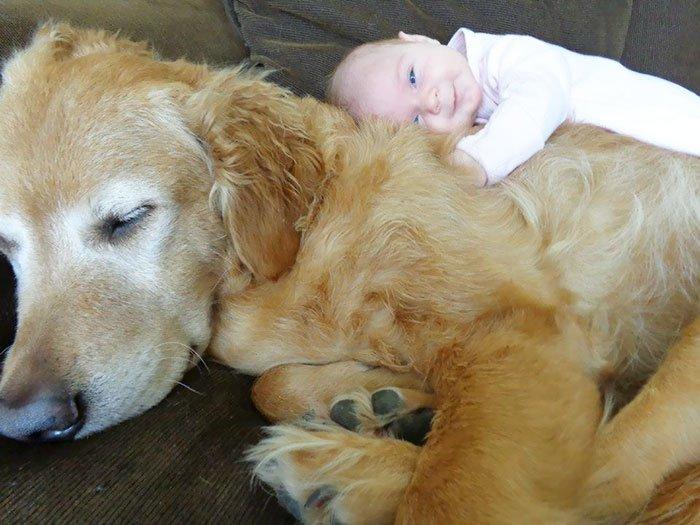 Дети спят в обнимку с собаками