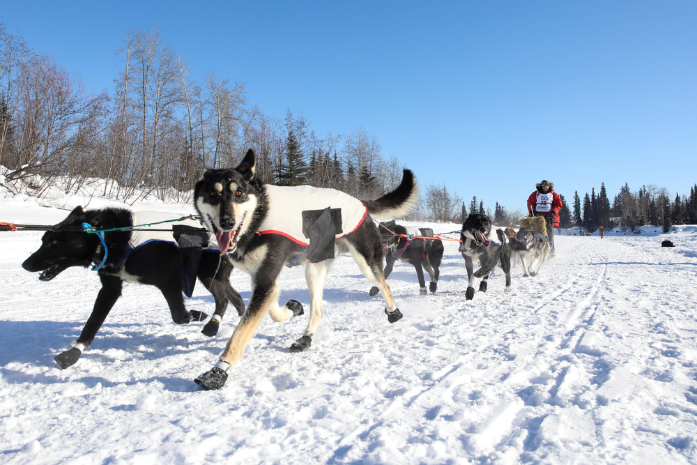 Гонки на собачьих упряжках на Аляске