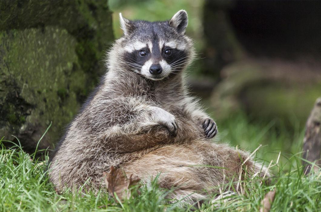 Милые и толстые представители мира животных
