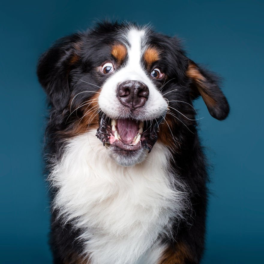 Портреты собак в свободном проявлении эмоций