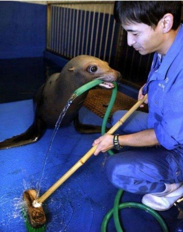 Животные, которые всегда готовы помочь