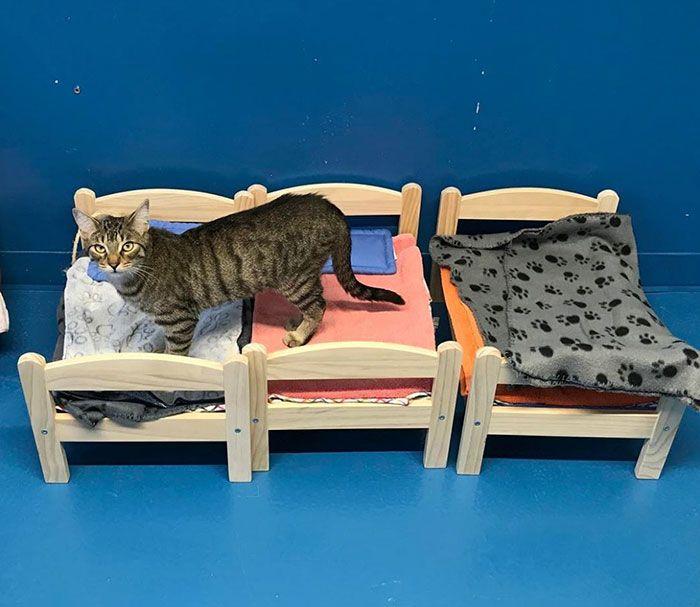 IKEA подарила приюту для животных кроватки для кошек