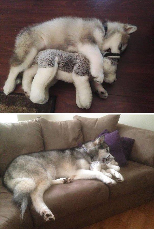 Милые животные, которые спят в обнимку с игрушками