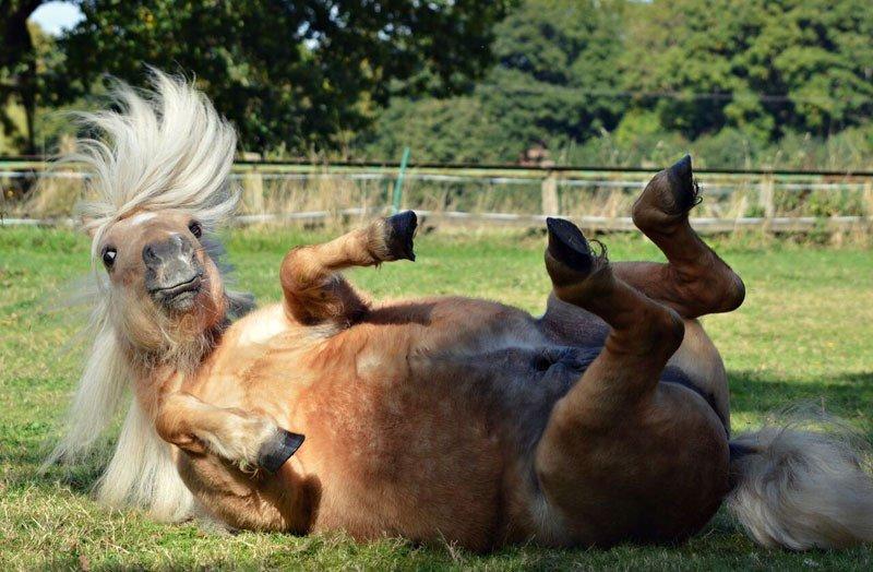 Смешные животные с конкурса 2017 Comedy Pet Photography Awards