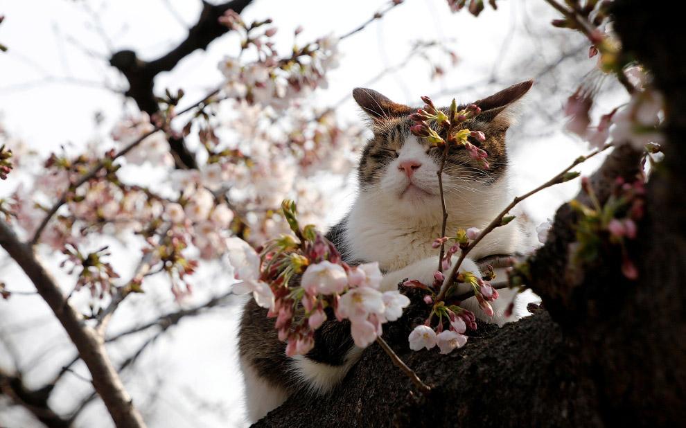 В северном полушарии наступила весна