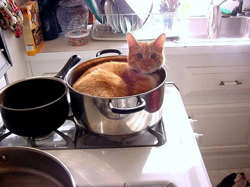 Жидкие коты, которых можно налить в любую емкость