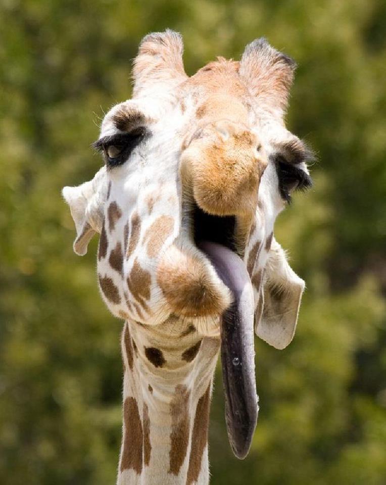 Когда животные нефотогеничны на снимках