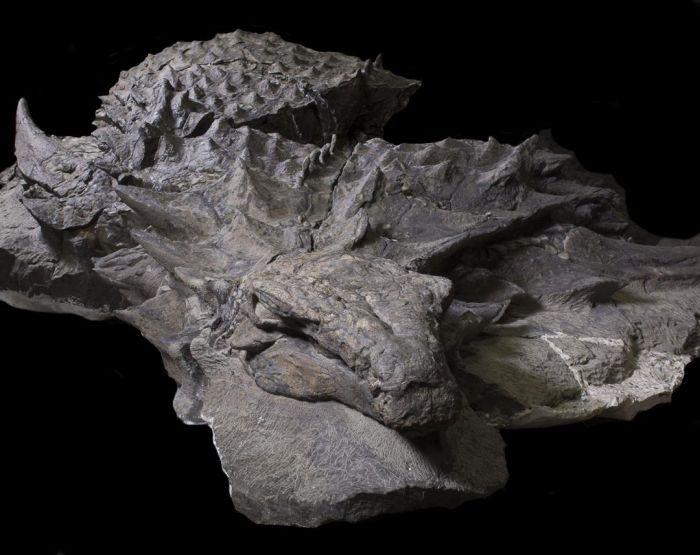 Останки нодозавра, которым уже более 110 миллионов лет