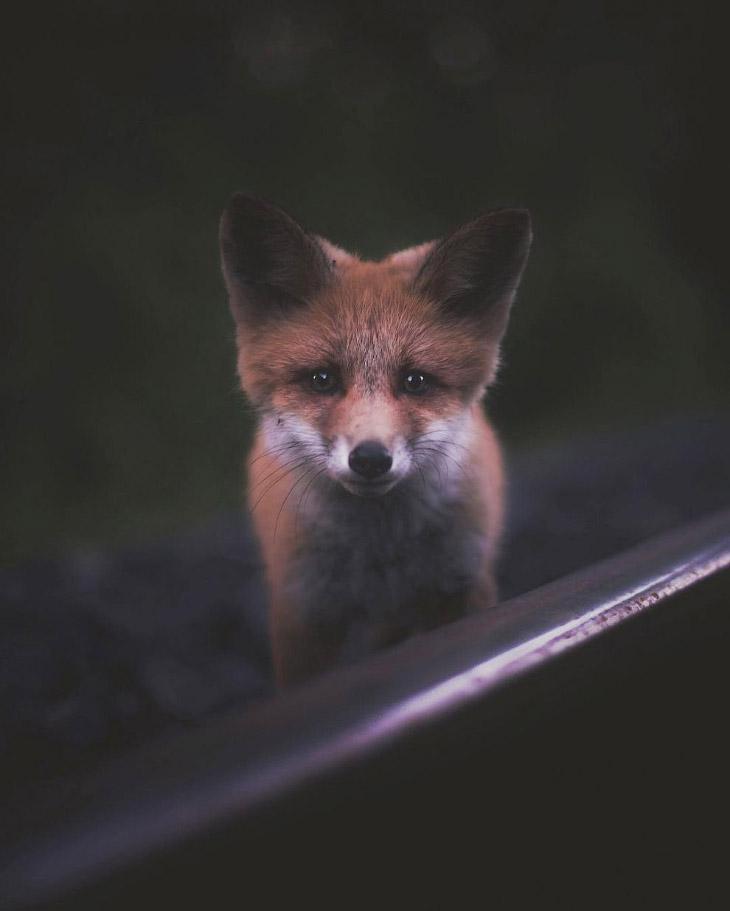 Портреты лесных животных от Konsta Punkka