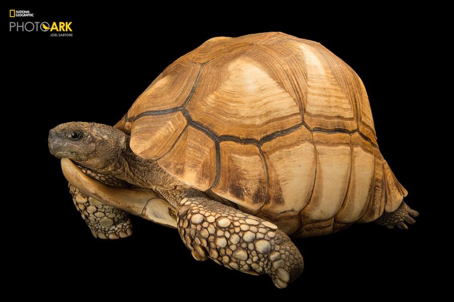 National Geographic начал кампанию за сохранение исчезающих видов