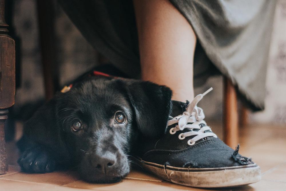 Победители фотоконкурса Dog Photographer of the Year 2017