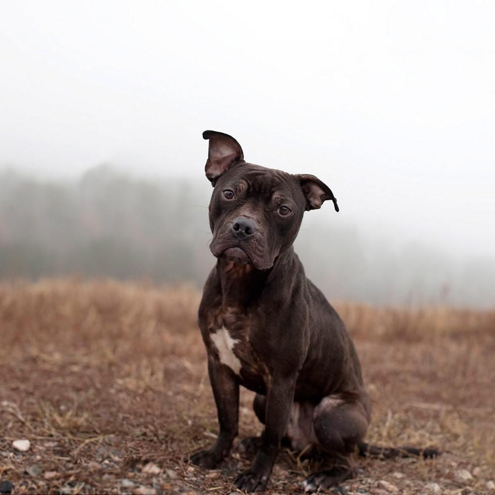 Американский фотограф делает снимки бездомных собак, спасая их от смерти