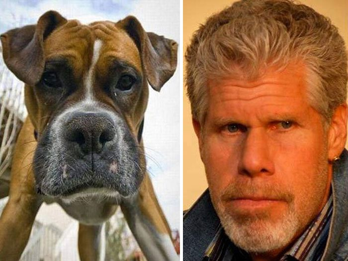 Двойники знаменитостей среди животных