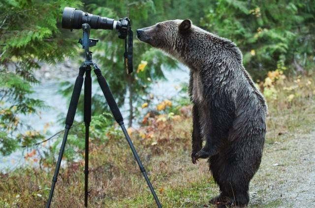 Фотографы дикой природы: что остаётся за кадром