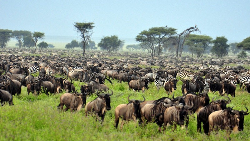 Крупнейшие стада и стаи животных
