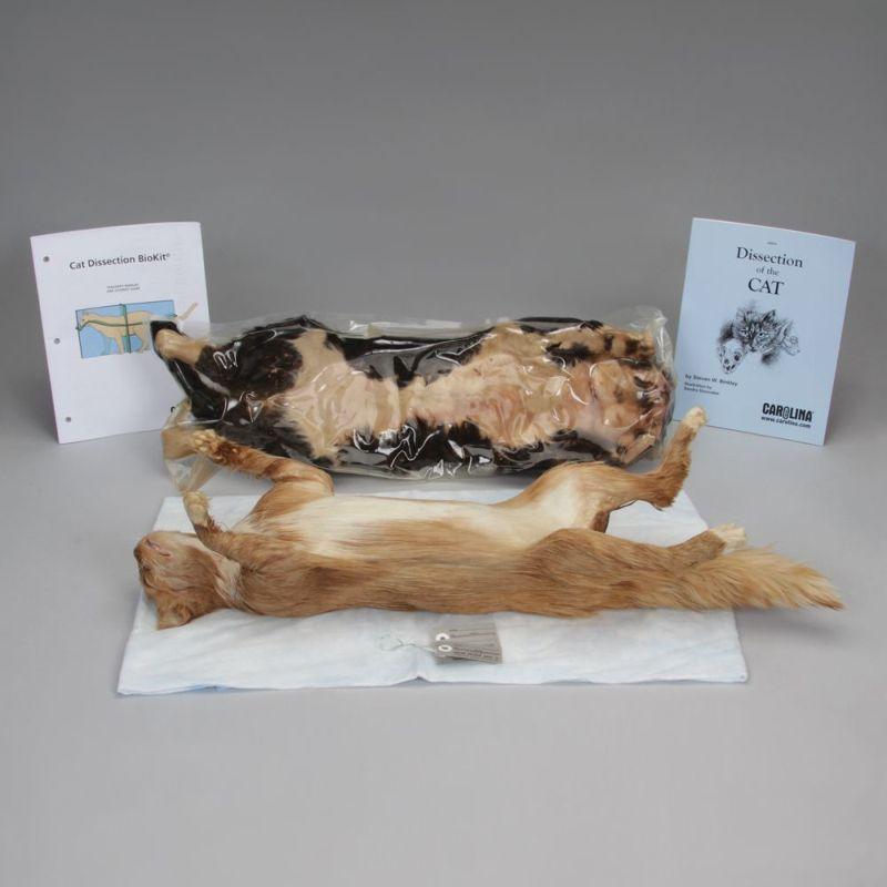 Тренировочные мертвые коты для начинающих ветеринаров