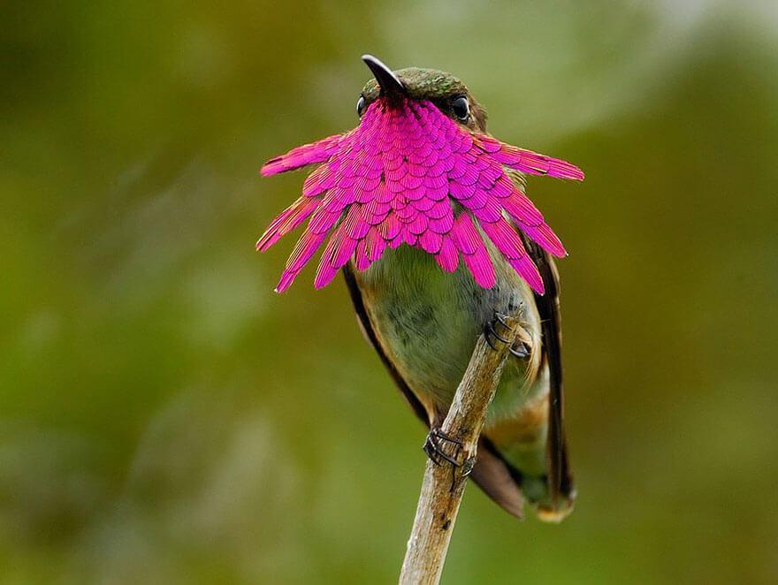 Яркие и красочные колибри