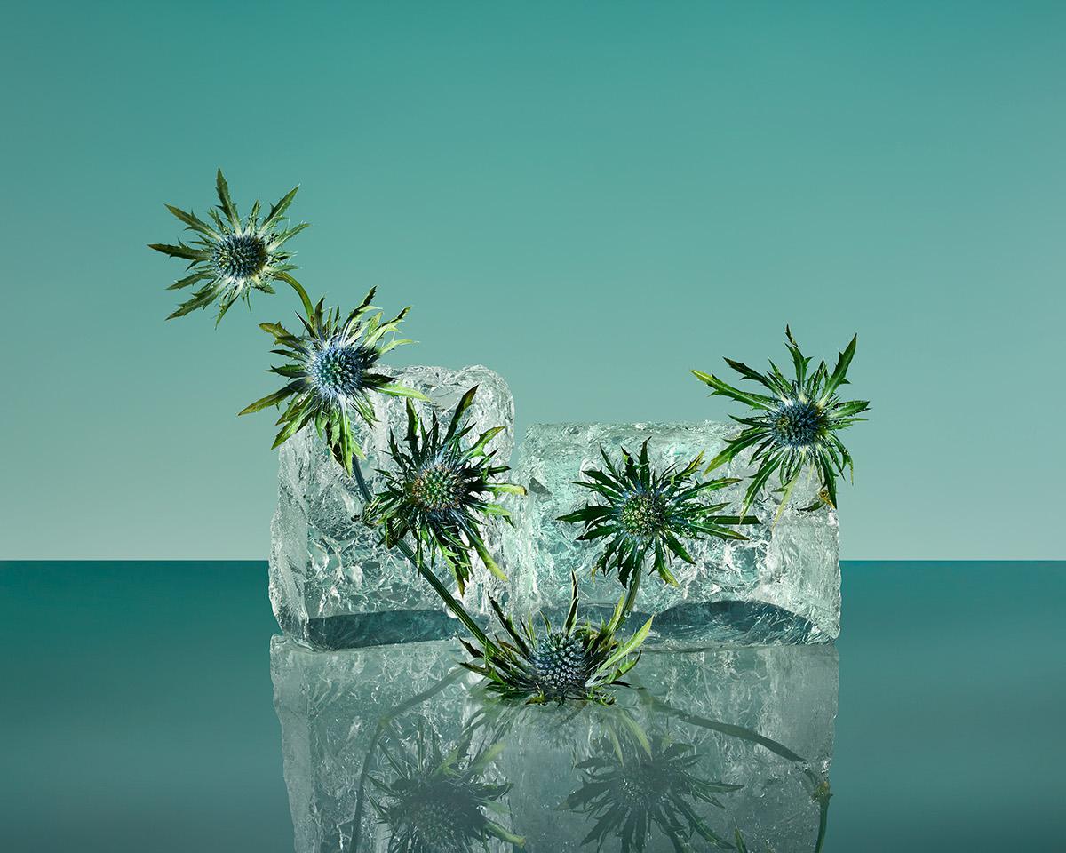 Замораживание цветов от Паломы Ринкон