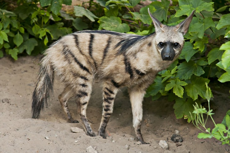 10 млекопитающих, о которых вы возможно не знали