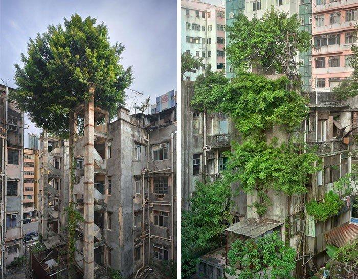 50 деревьев с непреодолимым желанием жить