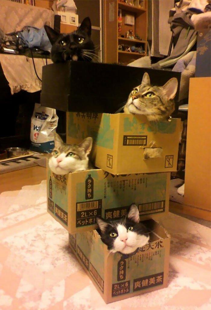 Кошки любят погружаться в коробки и другие емкости