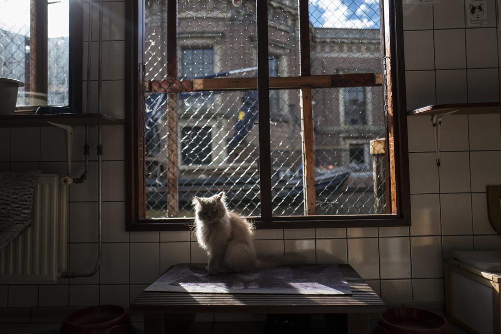 Плавучий приют для кошек в Амстердаме