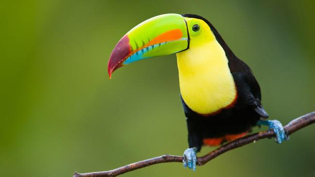 10 удивительных животных тропических лесов
