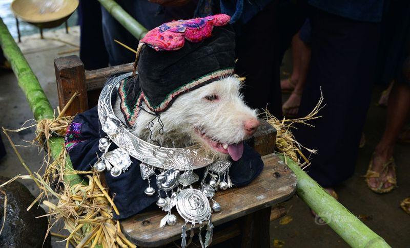 Фестиваль поклонения собаке в Китае