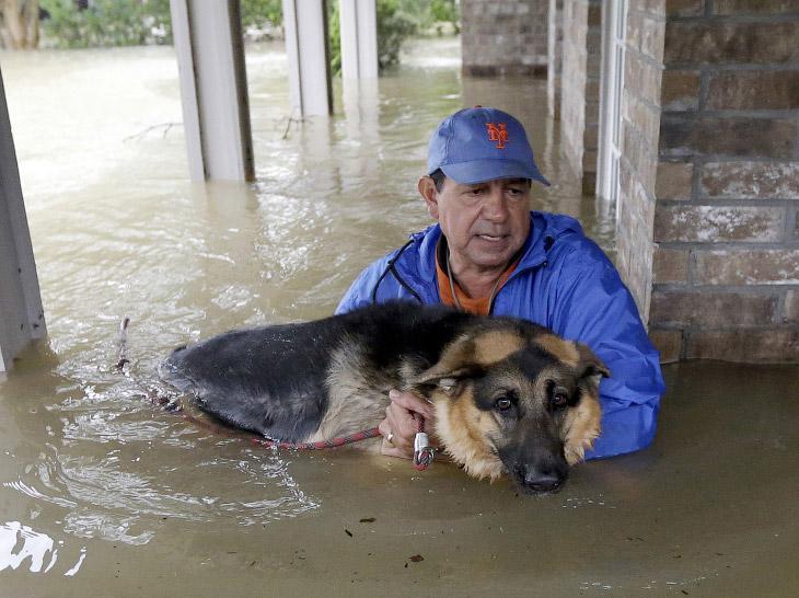 Как в США спасали домашних животных от урагана «Харви»