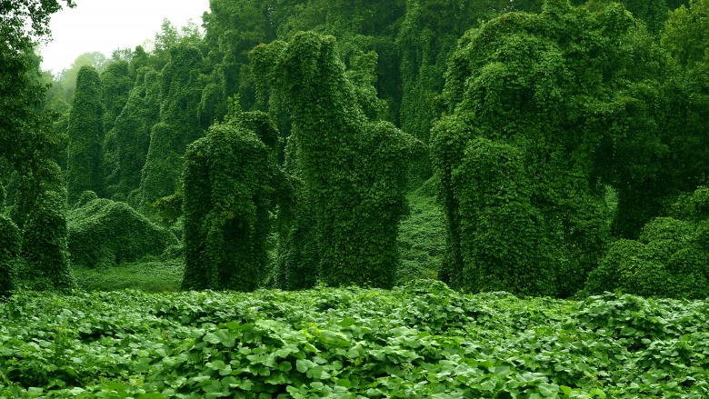 Растения, которые могут убить