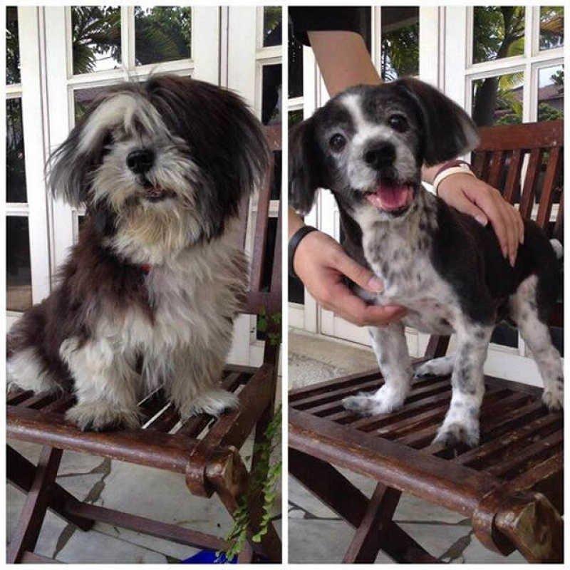 Забавные снимки собак до и после стрижки
