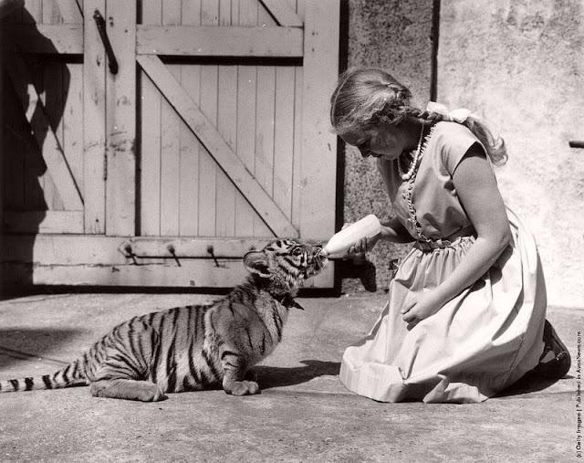 Дружба животных и людей на снимках XIX века