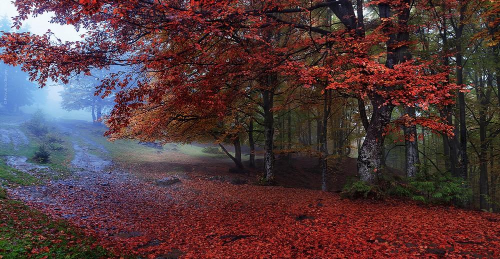 Красоты осени на снимках Сергея Полюшко