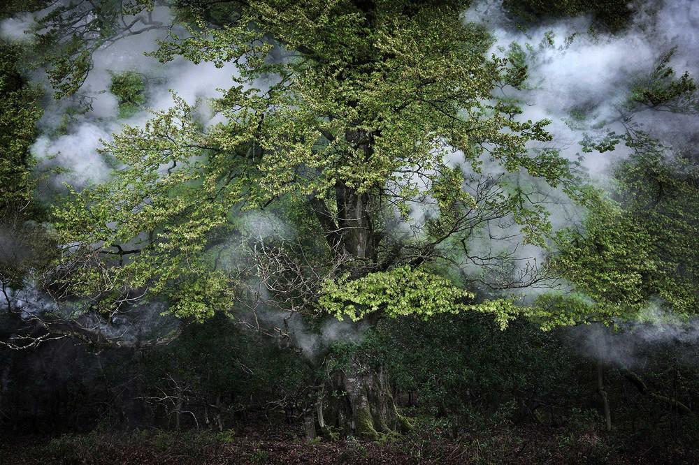 Лесные пейзажи Великобритании от Элли Дэвис