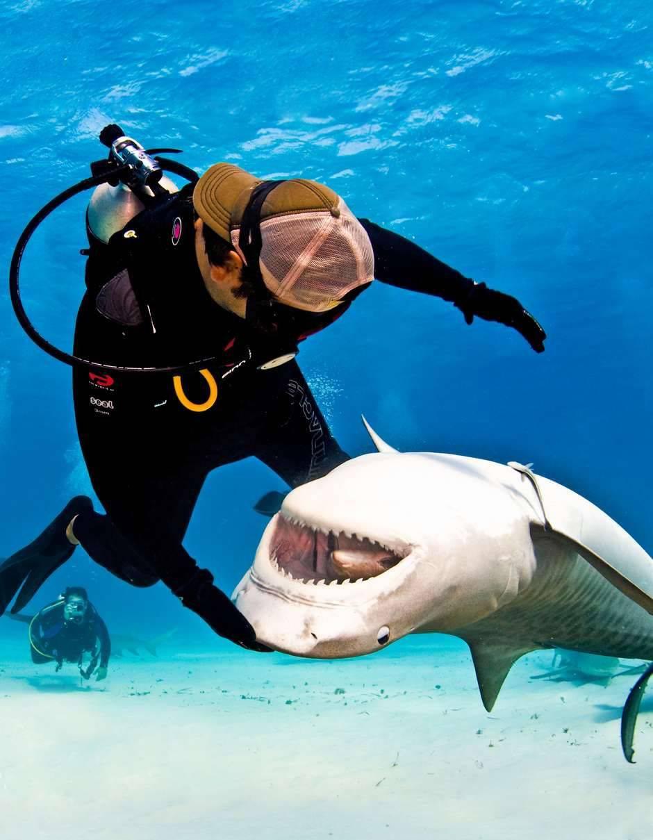 Прикол с акулой картинки