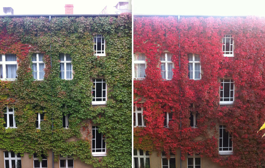 Удивительная красота осенних превращений