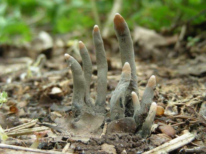Жуткие растения и грибы