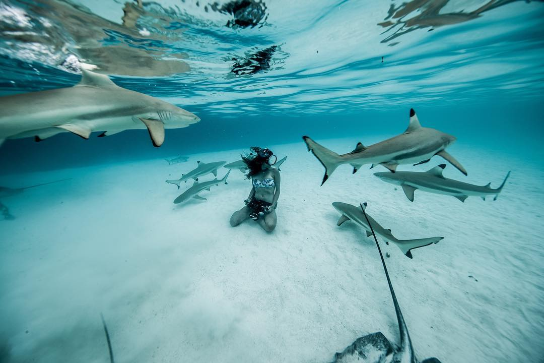 Австралийка без опаски плавает с акулами
