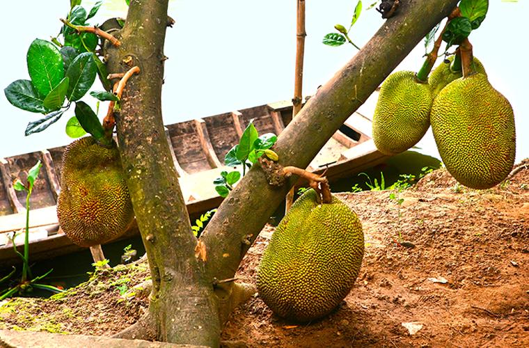 Экзотические деревья с продуктами на ветках