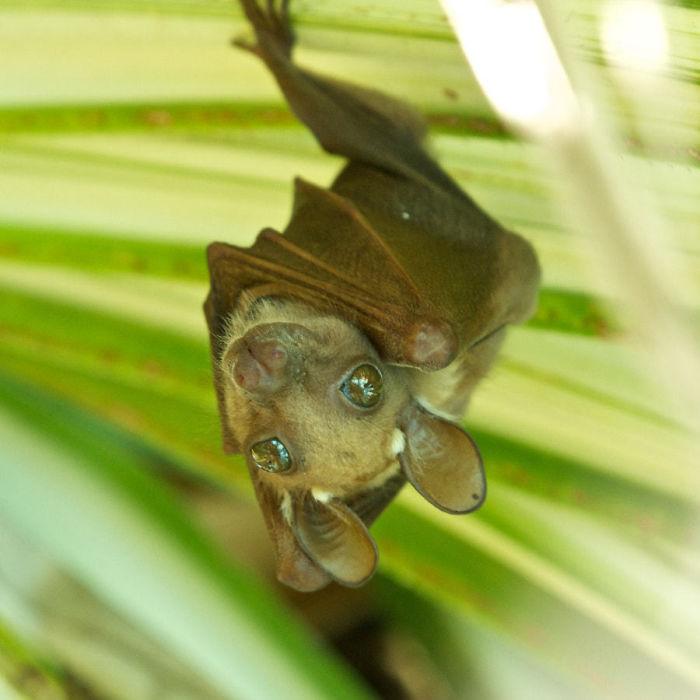 Летучие мыши не такие и ужасные существа