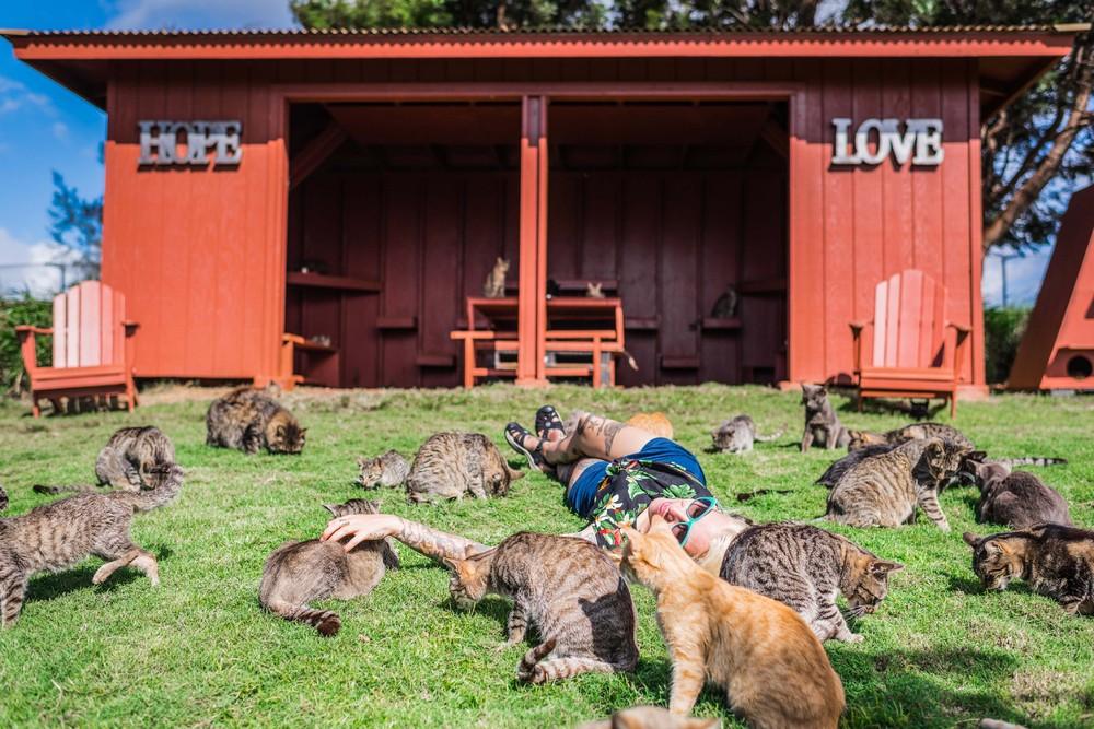 Рай для кошек на гавайском острове Ланаи