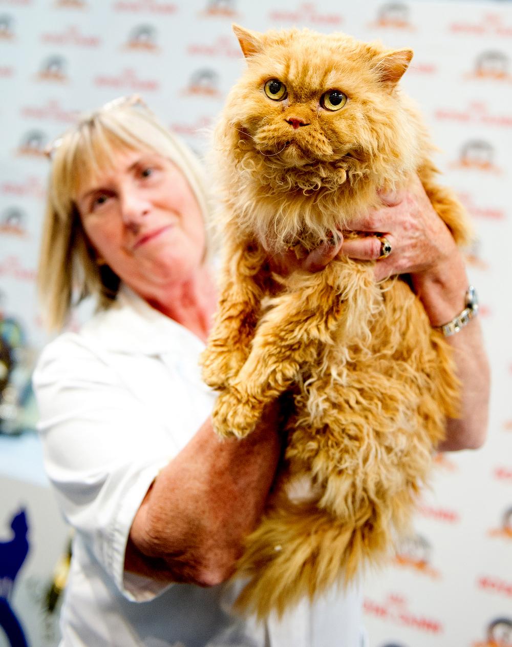 Выставка кошек в Великобритании 2107