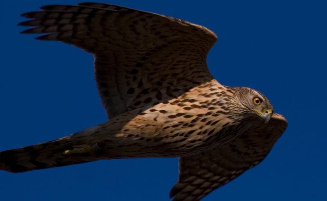 7 самых опасных птиц в мире