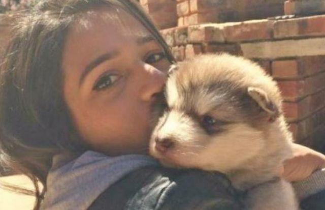 Девушка вырастила 70-килограммового аляскинского маламута