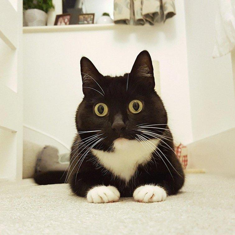Кошка, которая постоянно в шоке