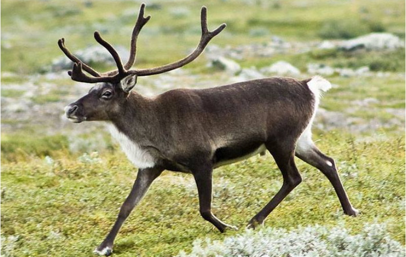 Удивительные факты о мире животных