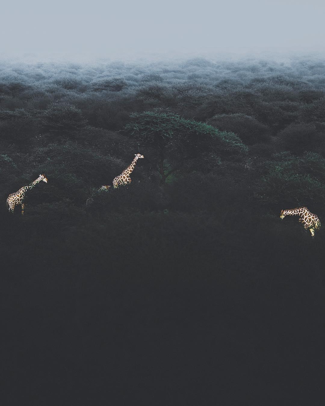 Природа и животные в объективе Донала Джеймса Бойда