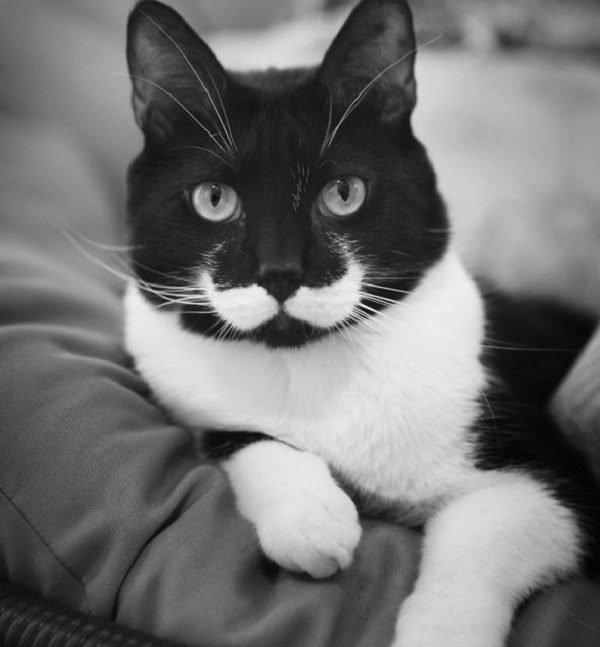 Стильные коты с усами и бородами