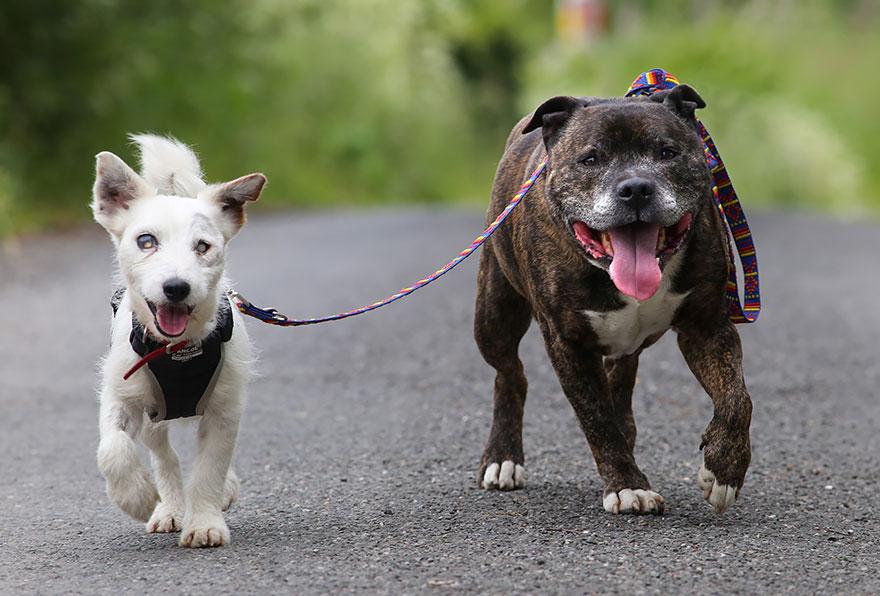 Удивительная дружба псов: Базз и слепой Гленн